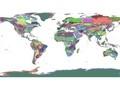 regionalization-world-wwf-terrestrial-ecoregions